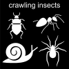 crawling insects Pictogram
