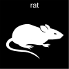 rat Pictogram